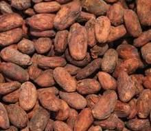 High Quality Dried Fermented Cocoa Beans at very good prices