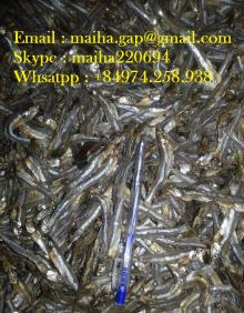 Dried Sun Sprat Anchovy Vietnam High Quality