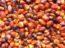 CPO ,Crude Red Palm Oil and refined Palm oil/Red Palm Oil/Refined Palm Oil/Palm Kernel Oil