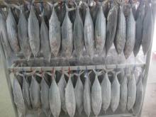 Fresh Frozen Tuna Fish