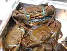 Giant Mud Crab, Frozen Mud Crabs