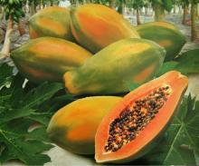 Fresh Papaya, Sweet Papaya Diced, Green Papaya, Fresh Pawpaw