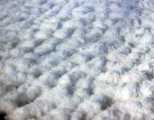 Raw Cotton, Surgical Cotton, Cotton Comber Noil, Cotton Wool