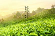 ZhangShuHu oolong tea