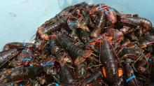 American lobster, rock lobster, spiny lobster, and red lobster