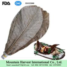 Magnolia Officinalis Leaves / Dried Hoba Leaves