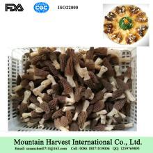Dried Morchella Mushroom