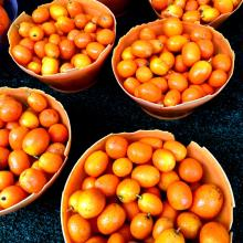 fresh Kumquat