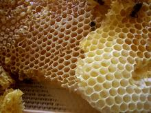 ee Wax, Bee Pollen, Bee Wax Bar, Beeswax Bar, Honey Wax