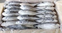 Замороженная Рыба Ставрида