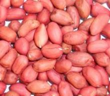 Grade A Peanut kernels