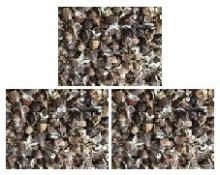 High quality Organic Moringa seeds