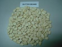 Organic Large Butter Beans