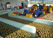 Industrial Turnkey Solution for mango and pineapple juice processing machine