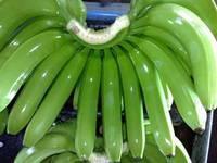 Green Cavendish Banana Premium Grade A
