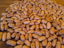 A & B Grade Sugar Beans