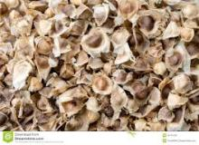 Dried Moringa Seeds Suppliers
