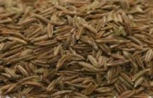 CUMIN SEEDS FOR SALE