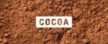 fat natural premium cocoa powder manufacturer