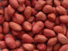 First Grade Redskin Peanuts For Sale