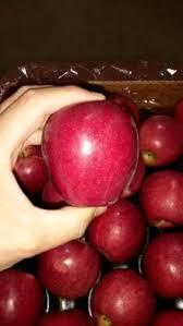 Red color fuji apple fresh style fruits for sale Fuji apple exporter in South Africa