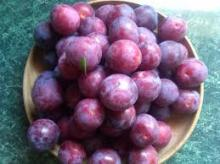 IQF Frozen style fresh plum wholesale