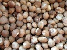 OMPETITIVE PRICE _WHOLE BETEL NUT_FOR IMPORTERS
