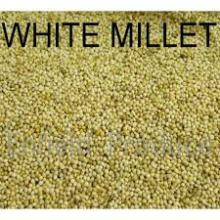 2016 Hot sale White and Yellow Millet