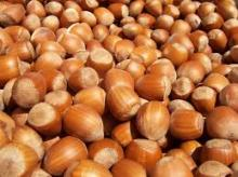 100% organic and natural Hazelnuts cheap price