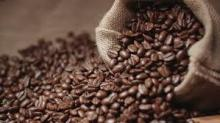 first class Robusta Coffee Bean