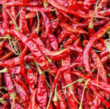 Dried Red Chaotian Chili of Sanying