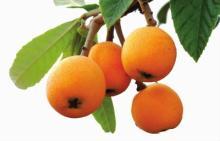 Ursolic Acid 25%-99% Factory Supply Loquat Leaf Extract