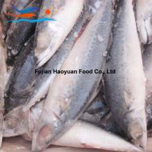 Land frozen pacific mackerel
