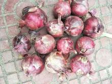 red onions hot sales