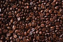 High Quality Arabica Coffee beans for sale