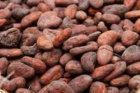 Cocoa Beans, Cocoa Powder, Coffee Beans