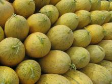High Quality Organic Hami Melon