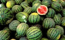 High Quality Fresh Water Melon/Watermelon