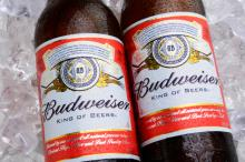 Budweiser Budvar Beer