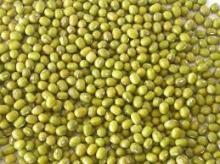 Fresh Green Mung Beans for sale