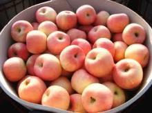 2017 new fresh fruits red Fuji apples