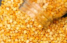 Best Quality Yellow Peas