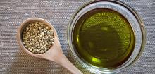 Hemp oil seed