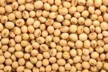 Dried Soybeans Non GMO
