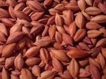 high quality Pili nuts Suppliers