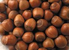Dried Hazelnut Quality Hazel Nuts Grade A for Sale