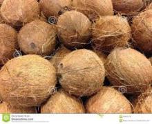 Best Mature Coconut for sale