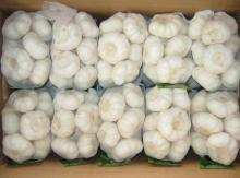 High Quality Garlic - new crop, hot sales