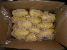 big size potatoes