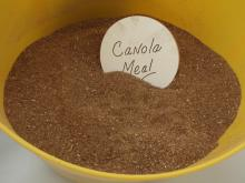Canola meal, Crude Protein 82%